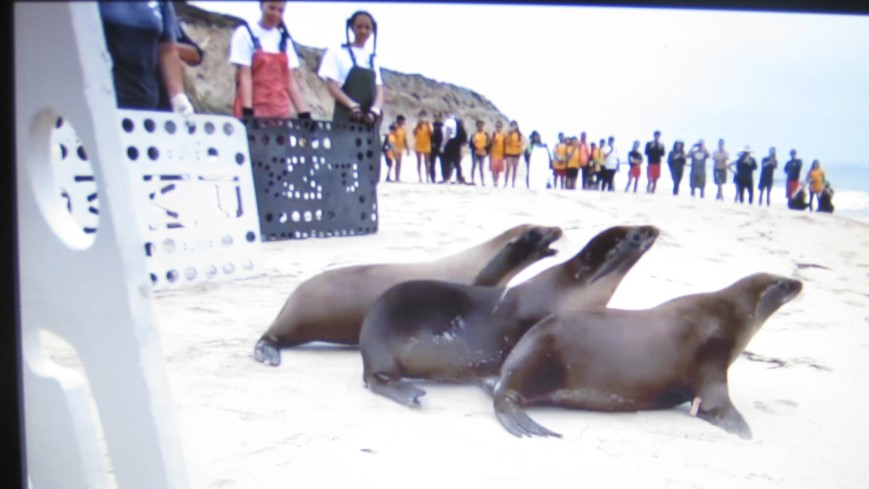 Three Seals Released